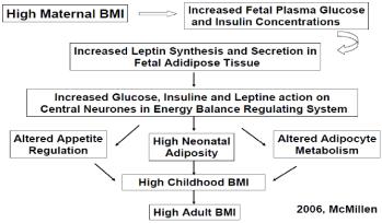 Mecanismos obesidad madre