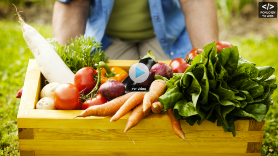 Dieta vegetariana déficit incompleta